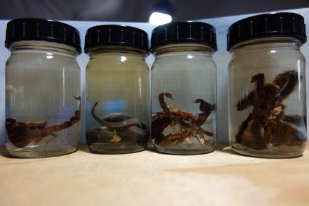 Et lille udvalg af de husdyr der blev fanget i teltlejren. Nu på glas.