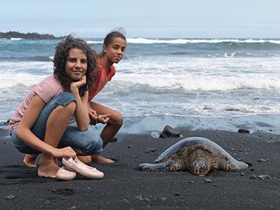 For et par dage siden da de stadig kunne spises af med at møde en skilpadde på stranden.... det er forbi!