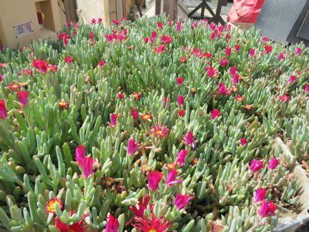 Jo, der kan vokse blomster i en ørken.