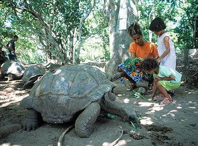 Til gengæld var der skildpadder, det er da de sejeste øgler!